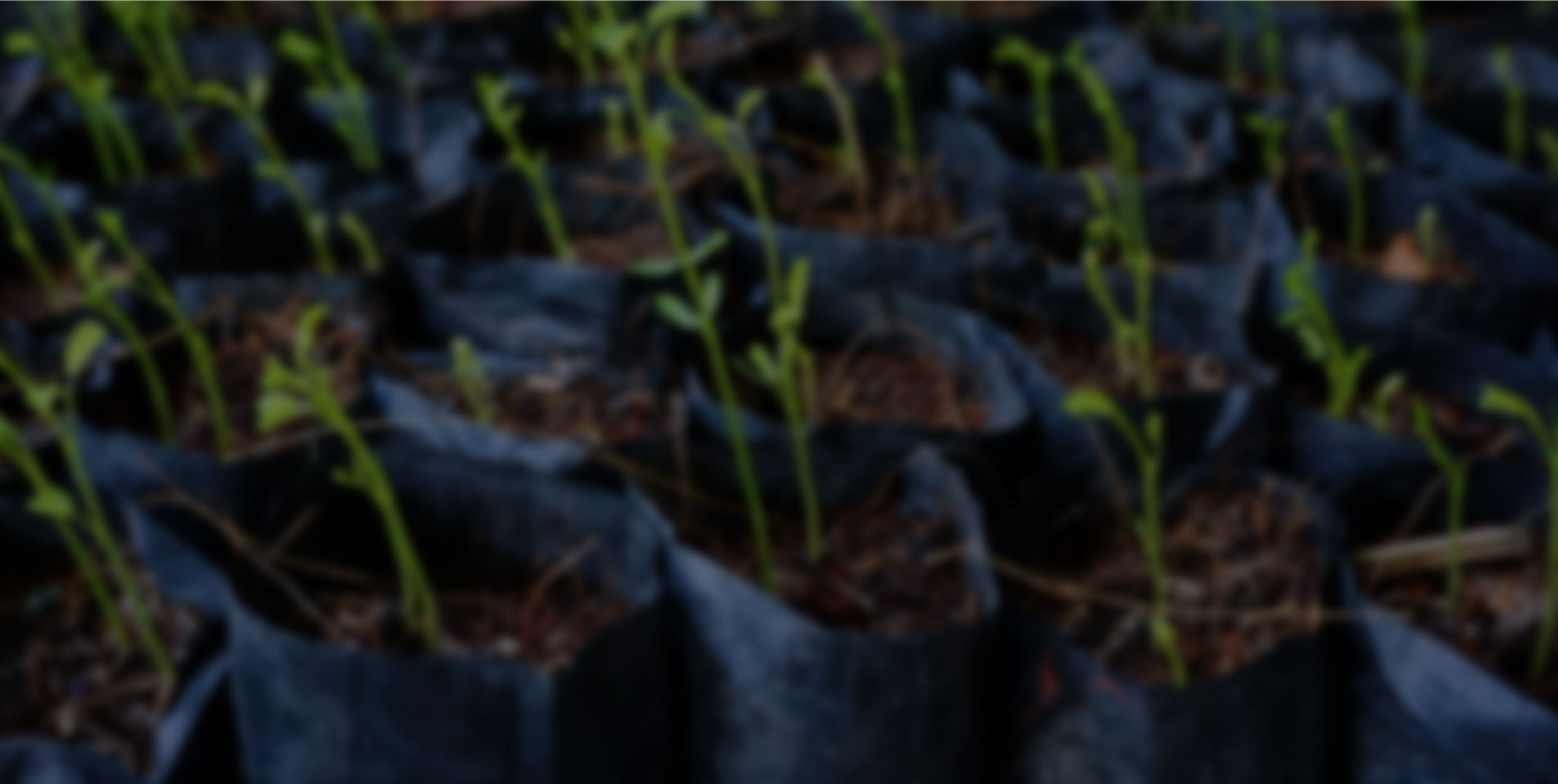 http://www.polytec.com.gt/sites/default/files/revslider/image/polytec-agroindustria.jpg